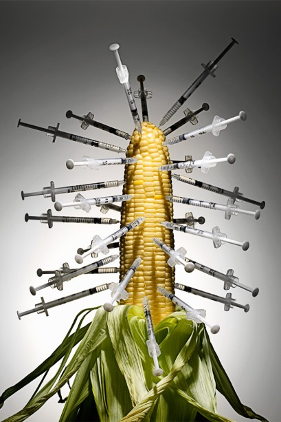 elle-genetically-modified-corn-de[1]