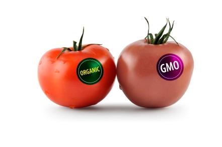 Organic_GMO_tomatoes[1]