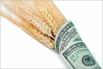 Wheat-Grain-Money-2726372[1]