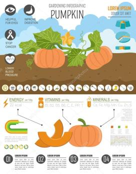 depositphotos_108124934-stock-illustration-gardening-work-farming-infographic-pumpkin[1]